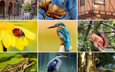 Biodiversité dans ma cité toulousaine – Ateliers nature